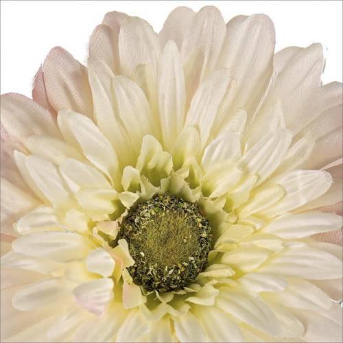 Fiore gerbera bianca 56h