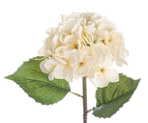 Fiore ortensia bianco crema 52h