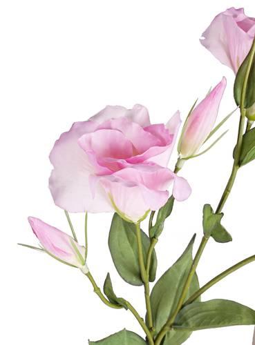 Fiore lisianthus rosa ramo boccioli 78h